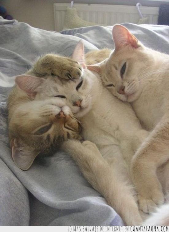 Competicion,Dormir,Gato,Hermanos,Juntos,Vagos