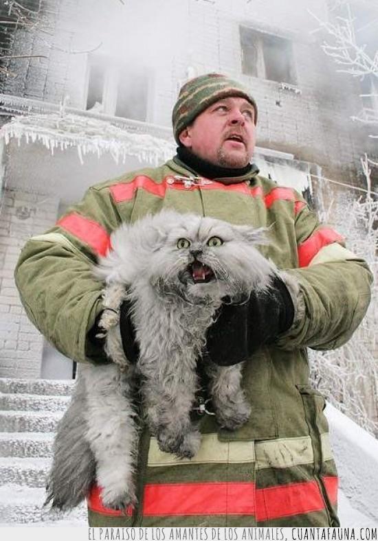 bombero,expresion,fuego,histeria,incendio,rescatar,rescate,salvar