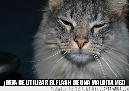 cegado,flash,fotos,gato,ojos cerrados
