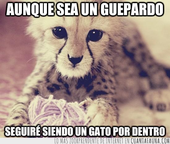 bonito,gato,guepardo,lana,miau,ovillo