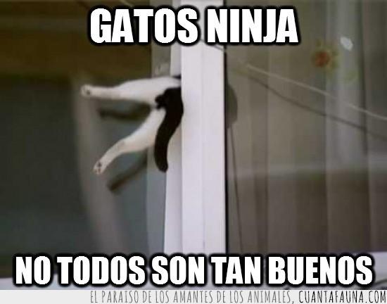 blanco,camino,cola,en medio,gato,gracioso,negro,ninja,ventana