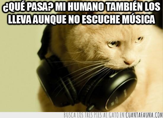 Auriculares,Cascos,Complemento,Escuchar,Gato,Música,Rubio