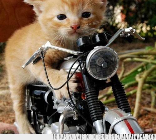 cachorro,gato,juguete,moto