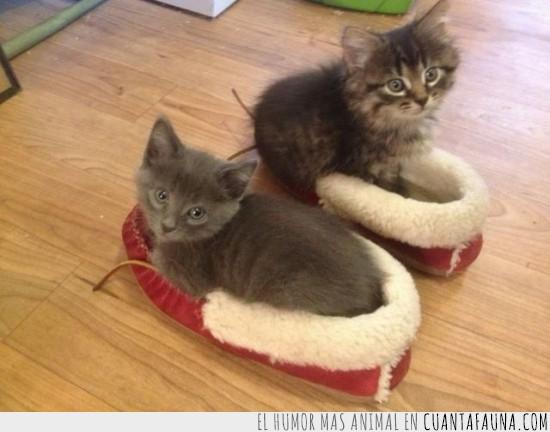 acostados,cachorros,gatos,zapatillas