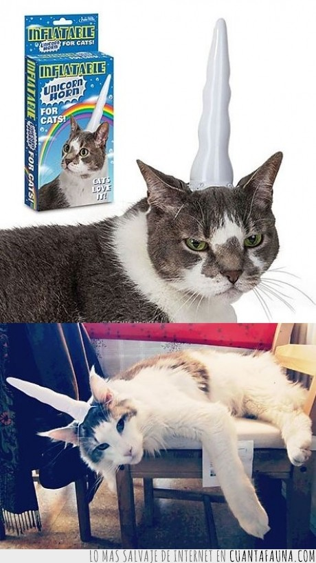 chorrada,curiosite,disfraz,gato,gatos,unicornio