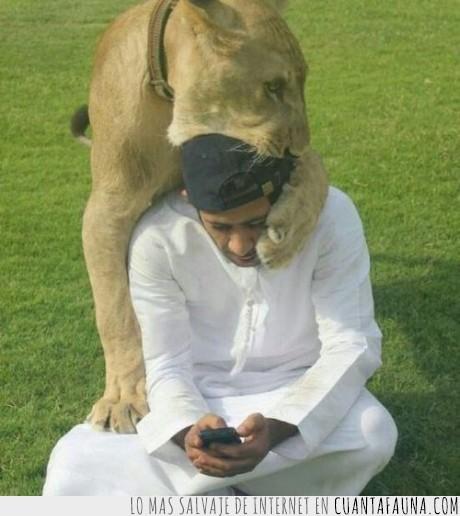 buscar,enviar,hombre,leon,leona,mensaje,movil,telefono