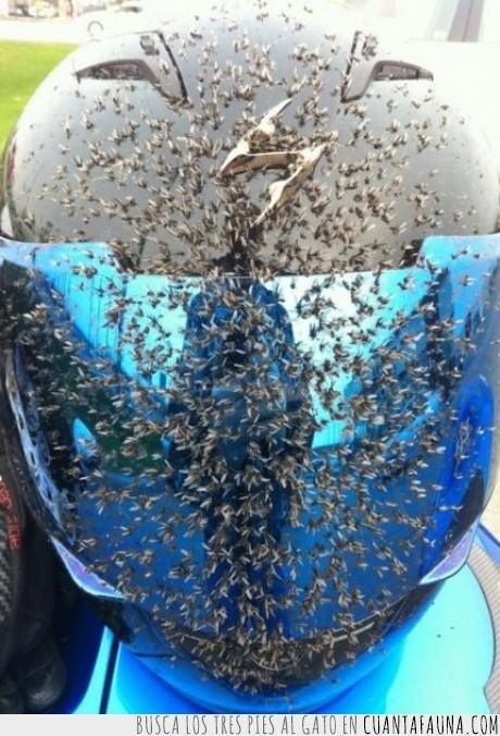 abejas,bicho,caídas,casco,insecto,moto,proteger,¿avispas?