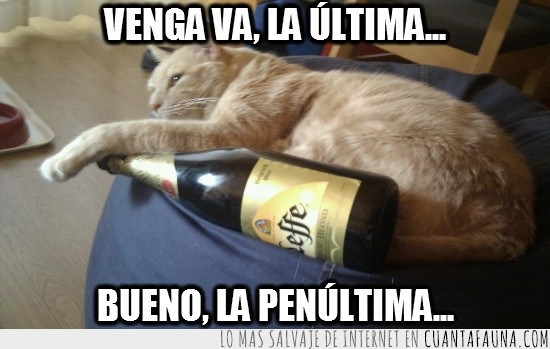 beber,borracho,cerveza,gato,leffe,ultimapenultima