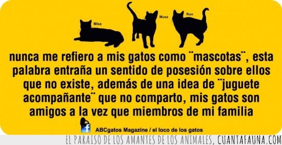 compañero,gato,genial,mascota,mi familia,texto