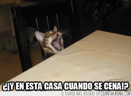 Offtopiqueando - Página 5 CF_5076_66d3d221745d4c90bdcb69b48c39038e_gatos_igual_es_por_el_hambre_pero_no_son_maneras_gatito