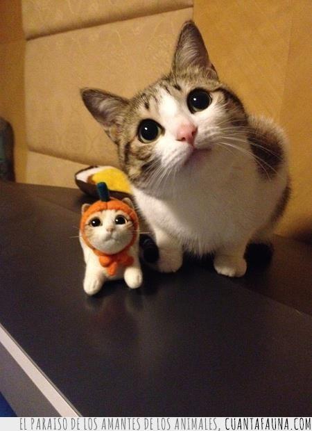 Gatito,Gato,Gorro,Hijo,Identicos,Peluca