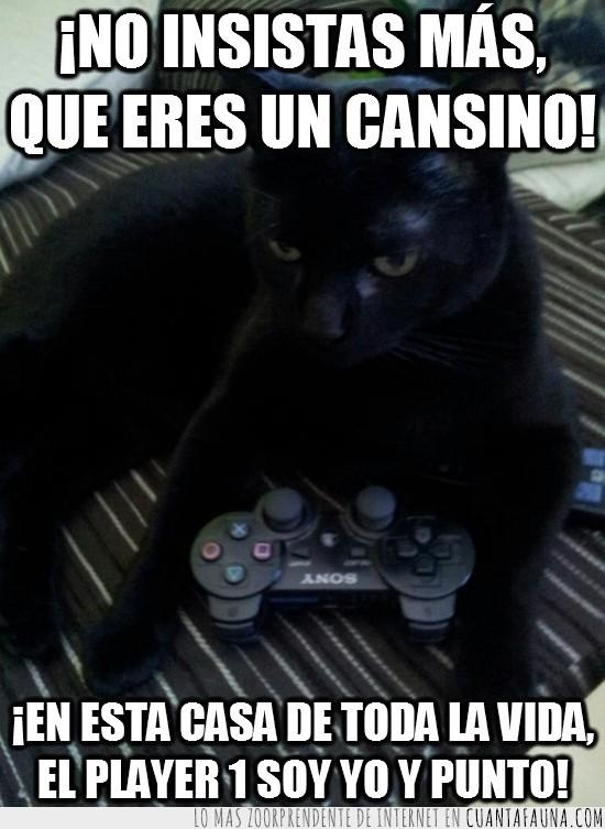 cansino,gamer,gato,insistir,mando,playstation,videojuegos