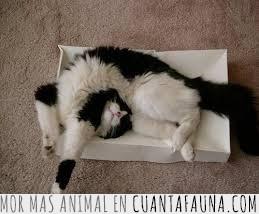 comodidad,comodo,dormir,gato,imposible,postura