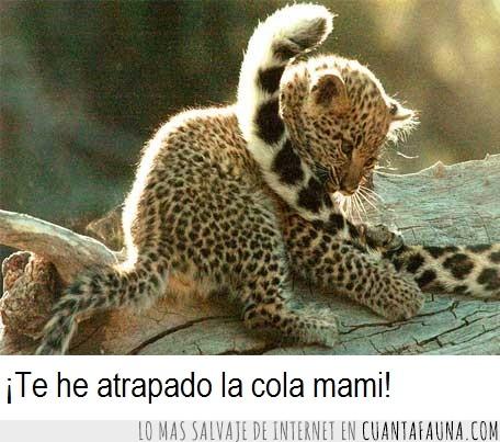 cola,gato,jugar,leopardo,madre,mono,punto,rojo