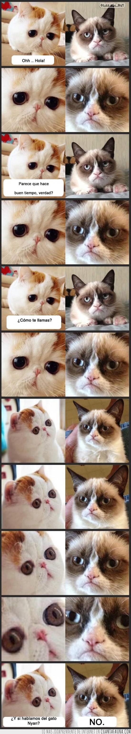 conocerse,gato gruñon,Grumpy cat,hablar,nyan cat