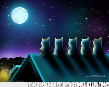 comer,duda,luna,noche,tejado