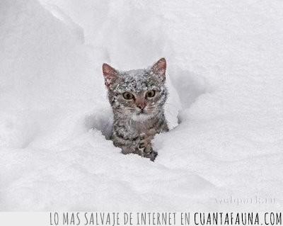 enfado,mosqueado,nieve