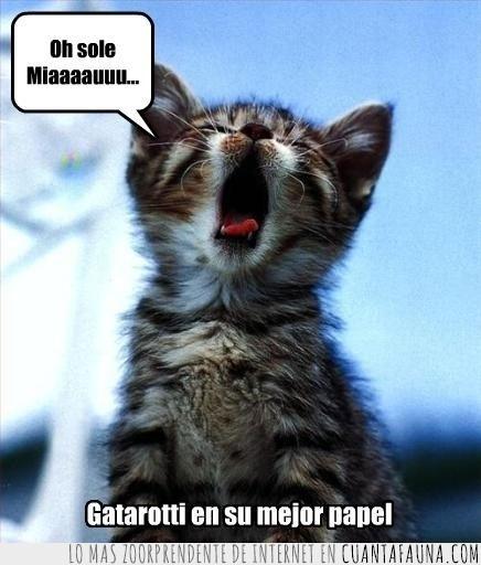cantante,cantar,Gatarotti,gatenor,pavarotti,tenor