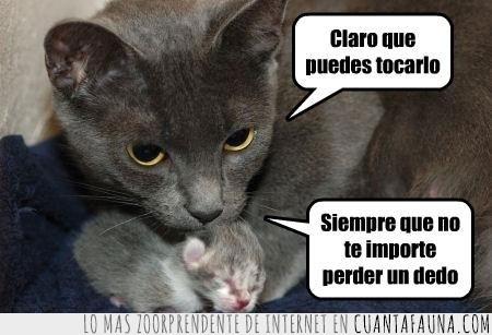 amenaza,gatito,hijo,madre,tocar,tu mismo
