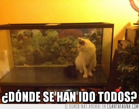 acuario,donde han ido,Gato,pecera,peces,vacio