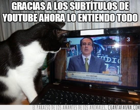 els matins,gato,internet,josep cuni,portatil,subtitulos,tv3,youtube