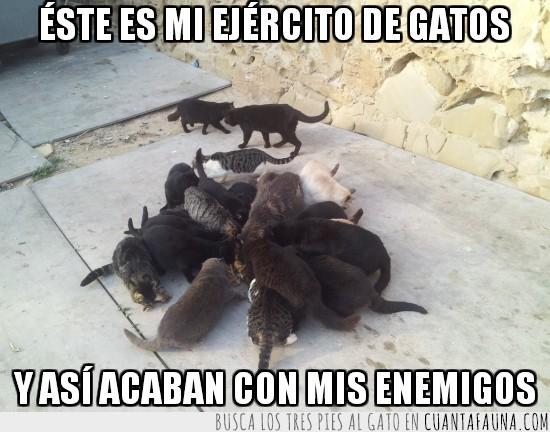 acabar con mis enemigos,comer,devorar,ejercito de gatos