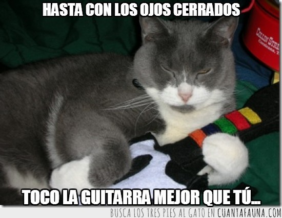 cerrados,gato,guitar hero,guitarra,mola,ojos,peluche,tocar