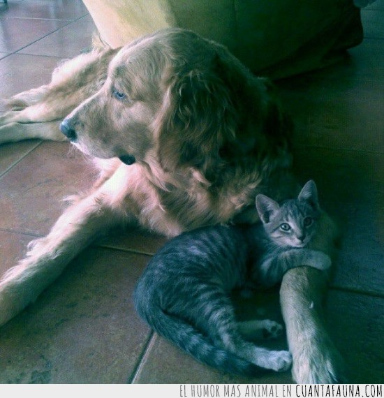 abrazos,amor,familia,gata,madre adoptiva,perra,tierno