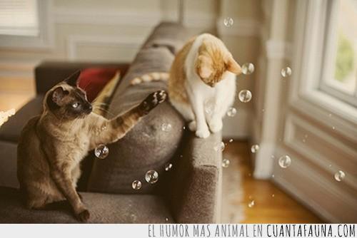burbujas,explotar,jabon,pompas