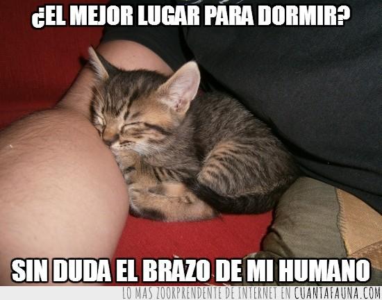 brazo,dormir,gato,humano