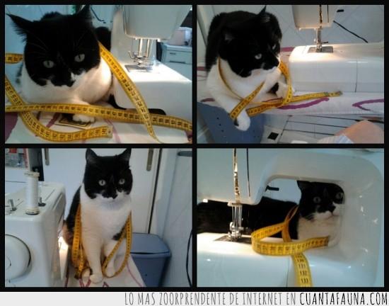 cinta metrica,diseñador,hilo,maquina de coser,moda,modisto