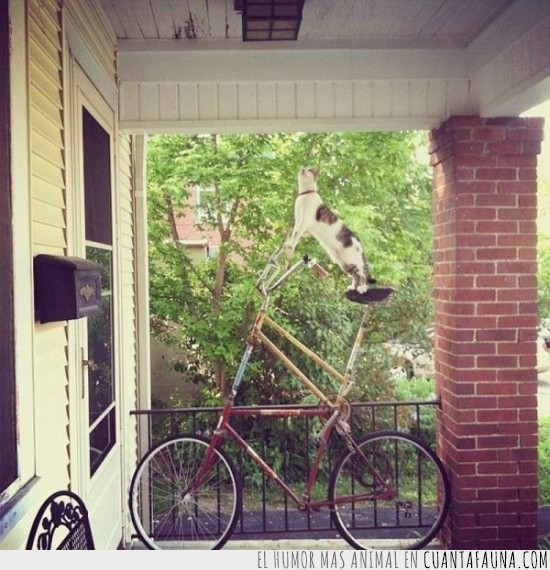 alta,bicicleta,de pie,doble,ruedas