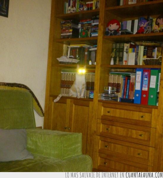 flash,gato,lámpara,ojos brillantes