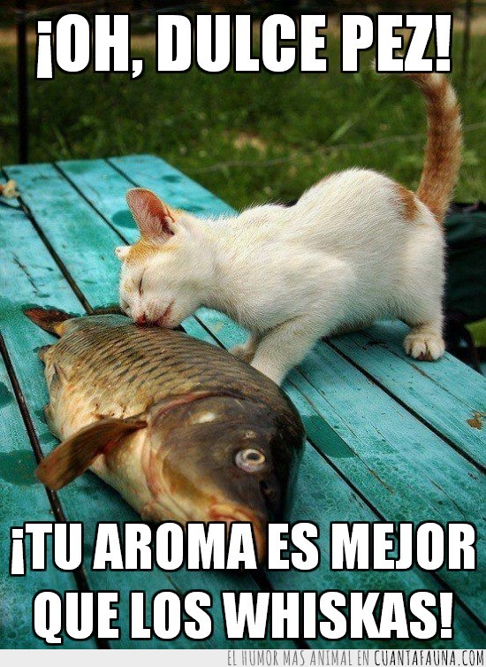 dulce,encontrar,gato,madera,pez