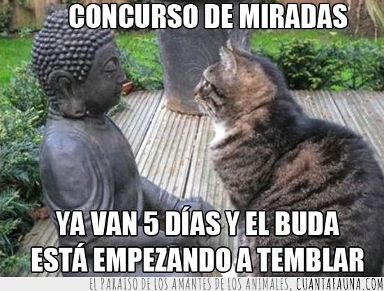 buda,concurso,de piedra,estatua,gato,mirada