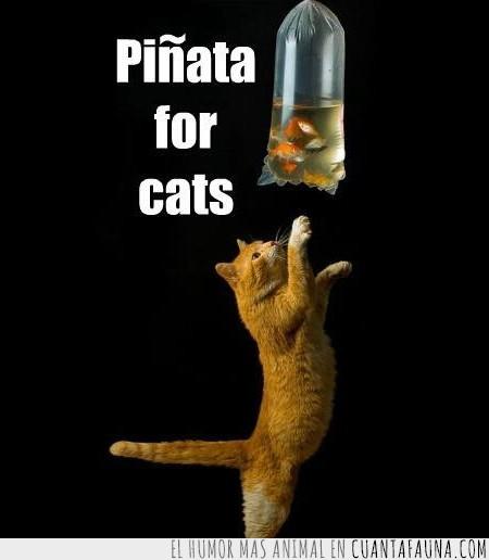 bolsa,gato,peces,perfecto,piñata