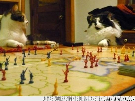 Gato,Guerra,Juego,Mapa,Plano,Soldados