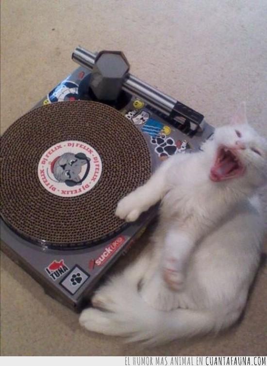 cantar,DJ,tocar