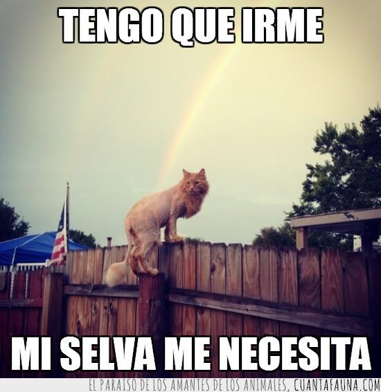 gato,gato león,selva