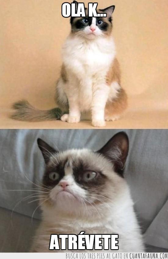atrévete,gato gruñón,grumpy cat,ola k ase,tard