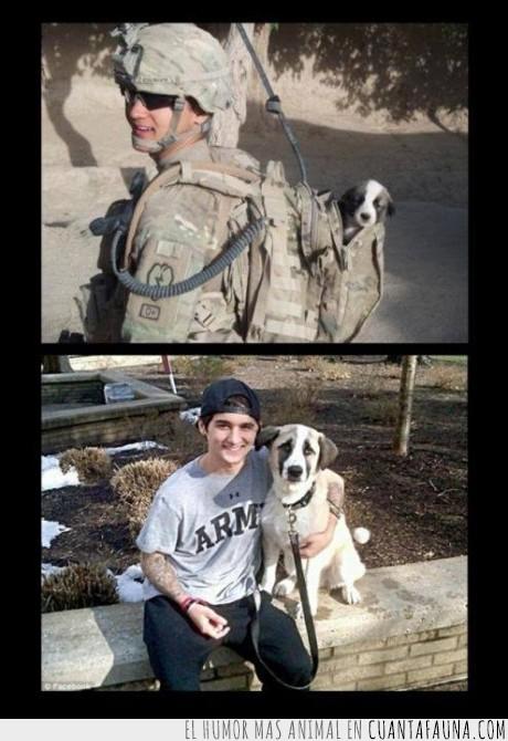amistad,cachorro,crecer,guerra,perro,soldado