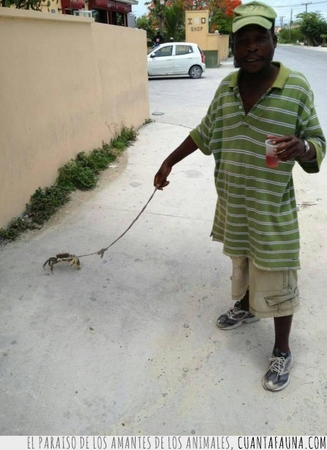 cangrejo,hombre,pasear,perro,sujeto
