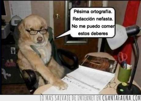 comer,deberes,ortografia,perro,redacción