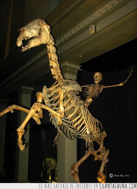caballo,ese es mi abuelo,esqueleto,montando,pose