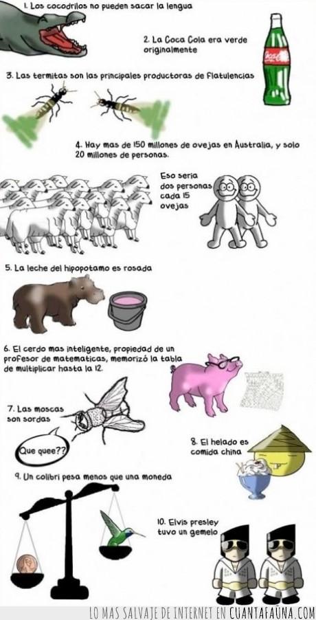 cerdos,cocacola,cocodrilos,colibrí,elvis,helado,hipopotamos,moneda,moscas,ovejas,termitas