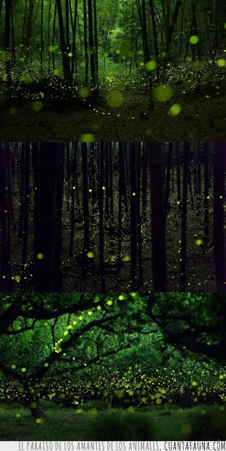 color,lluvia,luciernaga,luz,Son los Luciérnagas del Last of Us,verde