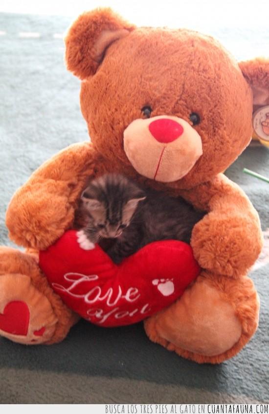 adorable,gatito,gato,osito,peluche