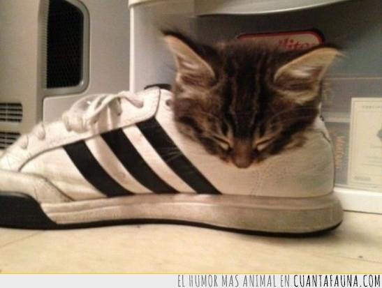 Adidas,Caliente,Cómodo,Dormir,Zapatilla
