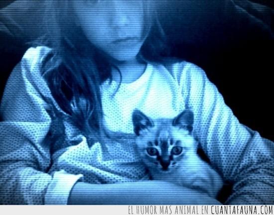 coger,dueña,espiritu,fantasma,gato,mirar,pijama