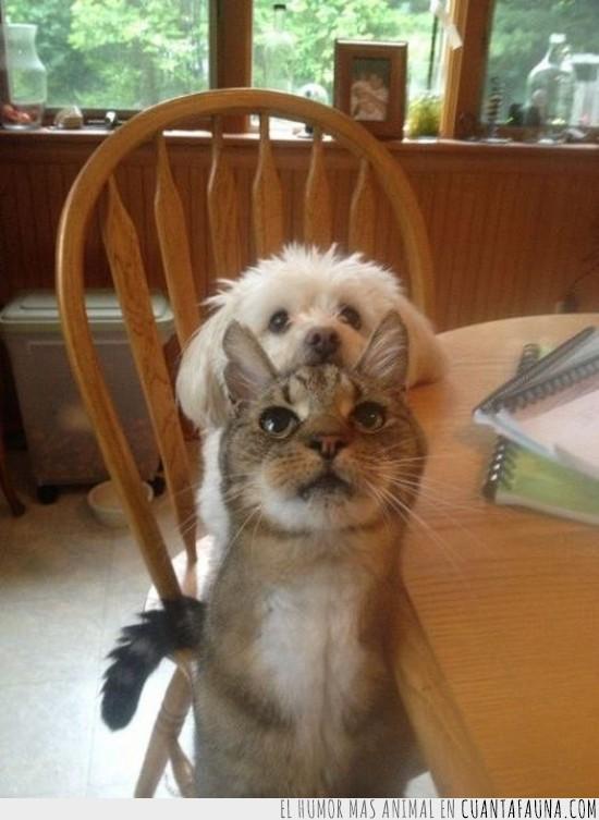 Cenar,Comer,Gato,Hora de comer,Mesa,Perro